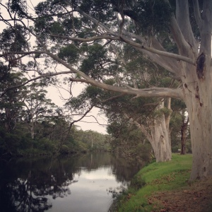 Down by the river in Denmark, WA.